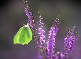 一组超唯美好看的蝴蝶图片