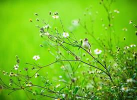 春天里可爱的小鸟图片