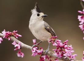 优美动人的小鸟图片