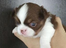 一组萌萌哒超可爱的小奶狗