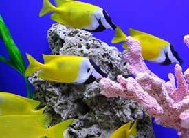 色彩斑斓的观赏鱼图片