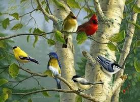 叽叽喳喳的小鸟们