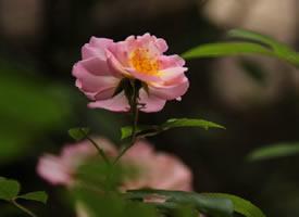 花開得自由自在、人活得心安理得