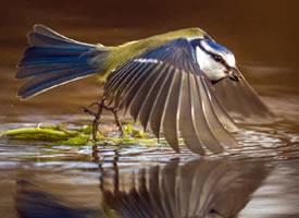 萌萌哒水边的小鸟