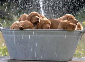 超可爱的犬家桶图片欣赏