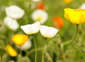小清新淡雅花卉图片桌面壁纸