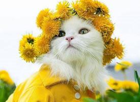 猫咪与花,真是绝配