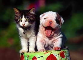 猫咪与狗狗和谐相处的美好画面