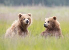草地里超可爱的小熊图片
