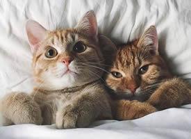 一组相亲相爱的猫猫图片