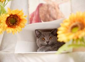 一组可爱的灰猫猫图片