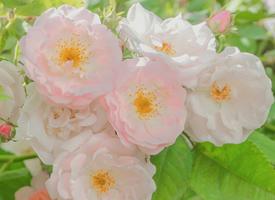 夏日花卉绿植唯美图片桌面壁纸