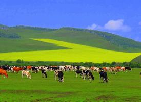 辽阔的内蒙古大草原图片