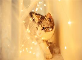 一组仙气的萌猫图片