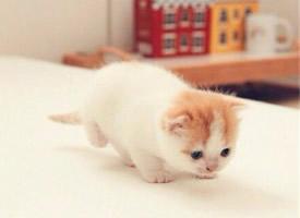 萌翻人的小猫咪
