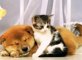 一组超有爱的猫咪狗狗图片