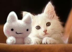 好看萌萌的猫咪图片