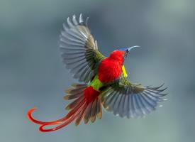 鸟类展翅高飞图片