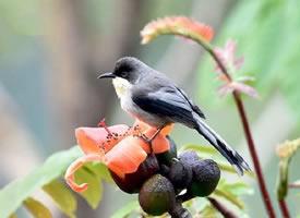 一组云南拍的鸟儿图片