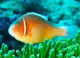 一组精美活泼的小鱼图片