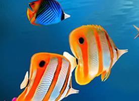 自由快乐的鱼儿图片