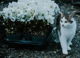 一组野外的猫咪图片