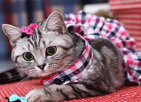 一组穿衣服的猫咪图片
