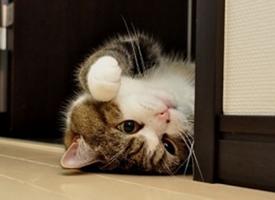 逗萌可爱的小猫咪图片