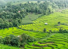 绿色梯田自然风景桌面壁纸
