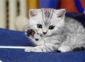 身边的萌宠猫咪图片