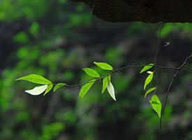 绿色植物高清护眼桌面壁纸