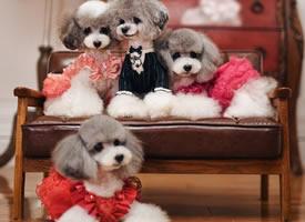 一组欧式背景下优雅的狗狗