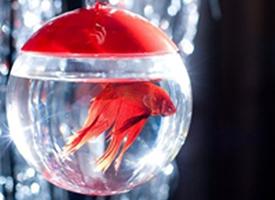 鱼缸里鲜活漂亮的小金鱼图片