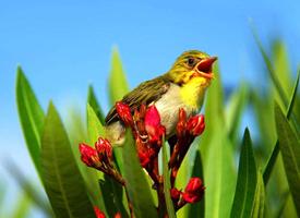 一组鸟语花香美景图片