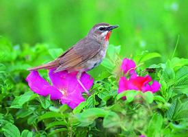 花朵上的小鸟图片