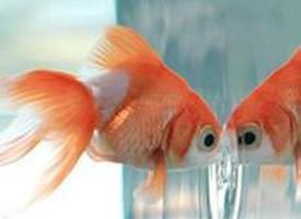 徜徉自由的小鱼图片