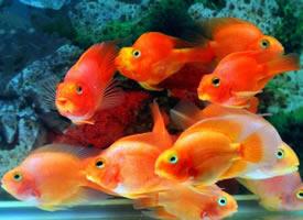 一组颜色好看的鱼群