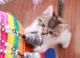 身边的可爱猫咪图片