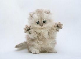娇小可爱的萌萌小猫咪图片