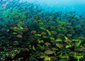 数量庞大的鱼群图片