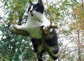 趴在树上的胖猫猫