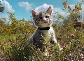一只会笑的小猫咪