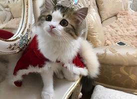 一只高贵的猫咪殿下图片