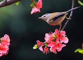 一组很美的鸟儿摄影图片