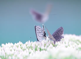 两只蝴蝶,相亲相爱一家人
