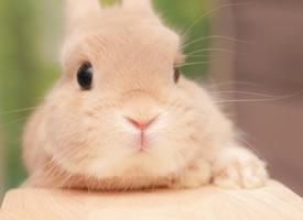 一组呆萌搞怪的小兔子