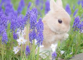 一组毛绒绒傻乎乎的小兔子