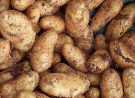 软糯好吃的土豆图片