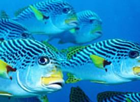 海洋里多彩好看的鱼儿图片