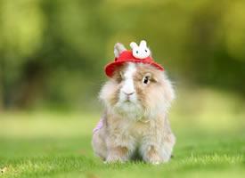 一组可爱的小兔兔图片欣赏